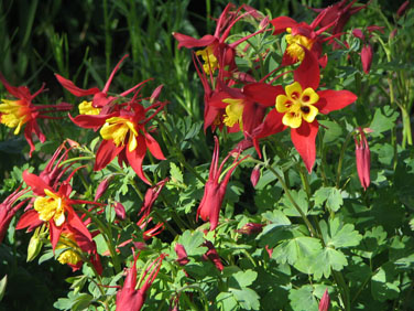 Perennials for WaterConserving Landscapes